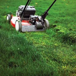 How to Mow a Tall Overgrown Lawn from